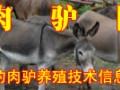 山东牛羊驴养殖场最新牛羊肉驴资讯介绍