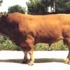 波尔山羊,种牛,肉牛,毛驴,种羊,育肥羊羔
