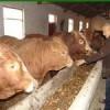 改良肉牛,种牛,牛犊,育肥羊羔,品种山羊,繁育毛驴
