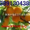 陕西金太阳杏基地,凯特杏产地,杏价格行情