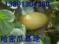 陕西红提葡萄基地,西瓜产地,金太阳杏,油桃价格行情