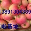 大量嘎啦苹果,美八苹果,花冠苹果,粉红女士苹果红富士苹果产地