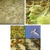 上海黄粉虫/上海黄粉虫养殖前景/上海黄粉虫养殖基地