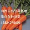 山西应县大量胡萝卜