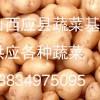 山西应县大量土豆、马铃薯