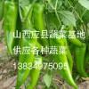山西应县大量圆椒、尖椒、牛椒