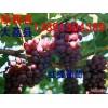陕西葡萄基地红提葡萄美人指葡萄户泰葡萄价格