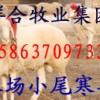 养殖场纯种波尔山羊 育肥羊 山东牛羊 小尾寒羊 种羊