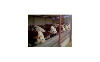 润吉肉牛养殖场供应肉牛最新价格,肉牛品种。养殖肉牛行情和效益