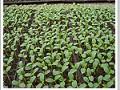 花木栽培基质 (4图)