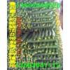 温室种植顶花带刺黄瓜生产基地大量上市