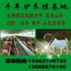 河南济源哪里有卖波尔山羊的济源波尔山羊种羊价格