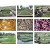 共建黄鳝泥鳅生态养殖示范培训基地招商
