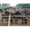 养驴,肉驴价格,小驴,养驴基地,肉驴品种,德州驴,肉驴养殖场