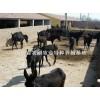 养驴,肉驴,肉驴价格,养驴场,养驴基地,养驴技术,肉驴养殖场