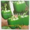 产地大量供应;甜椒,尖椒,青椒,牛角椒,红干椒等