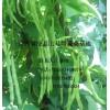产地大量供应;架豆王,四季豆,地豆,大扁等