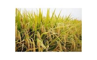 农业网讯国务院关于支持农业产业化龙头企业发展的意见