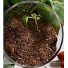 求购茶粕,中国大量收购茶粕制品