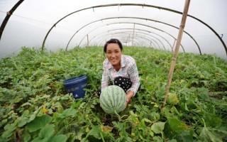 """江西横峰 """"十进村居""""让农民享受便利的公共服务"""