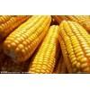 收购大米糯米碎米玉米高粱大豆小麦大麦