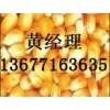 正荣现款『急购』油糠棉粕次粉小麦玉米等产品