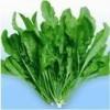 荠菜种子 大叶荠菜种子 野生荠菜种子