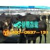 ㄗ供应德州肉驴、育肥牛犊、鲁西黄牛、改良牛、波尔山羊