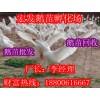 皖西白鹅丨鹅苗价格丨鹅苗丨鹅苗批发丨宏发鹅苗孵化场