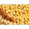 供应免税价进口大豆