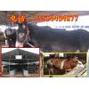 供应优质肉驴价格肉驴养殖场