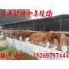 河南肉羊价格,河南肉羊多少钱一只