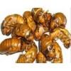 供应优质野生鲜活金蝉