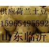 供应鲜土豆2017年山东土豆价格