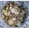 河北石家庄供应盐渍鲍鱼菇
