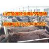 山东肉驴养殖场