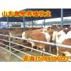 最新肉牛价格
