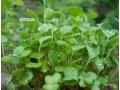 植物大全图片四