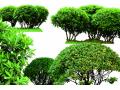 灌木图片二