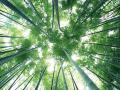 竹类图片五