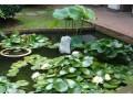 水生植物图片三