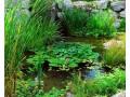 水生植物图片四