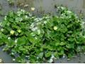 水生植物图片五