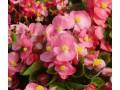 宿根花卉图片一