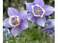 宿根花卉图片四