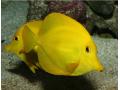 鱼类图片一