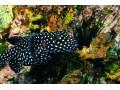 鱼类图片五