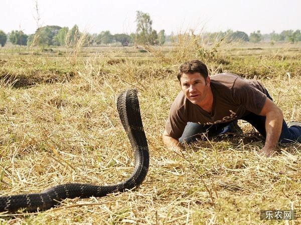 眼镜王蛇的天敌有哪些