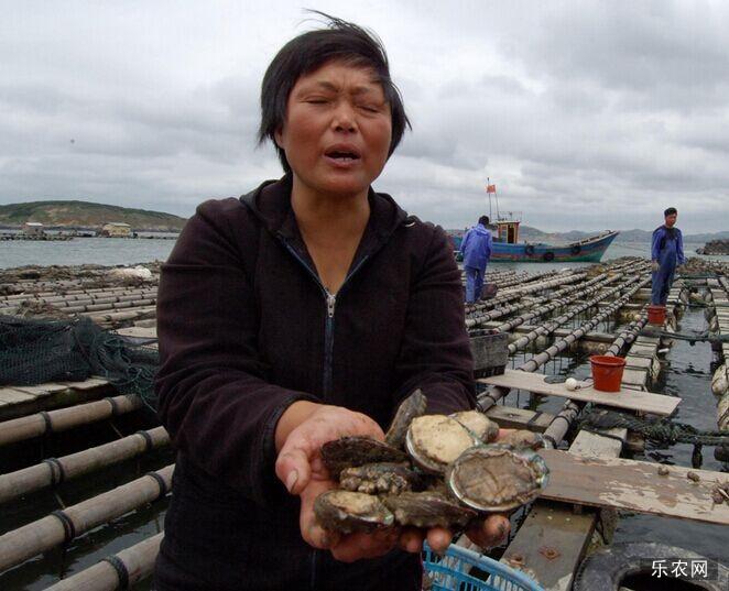 鲍鱼的养殖方法 鲍鱼养殖技术大全