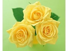 玫瑰花图片四